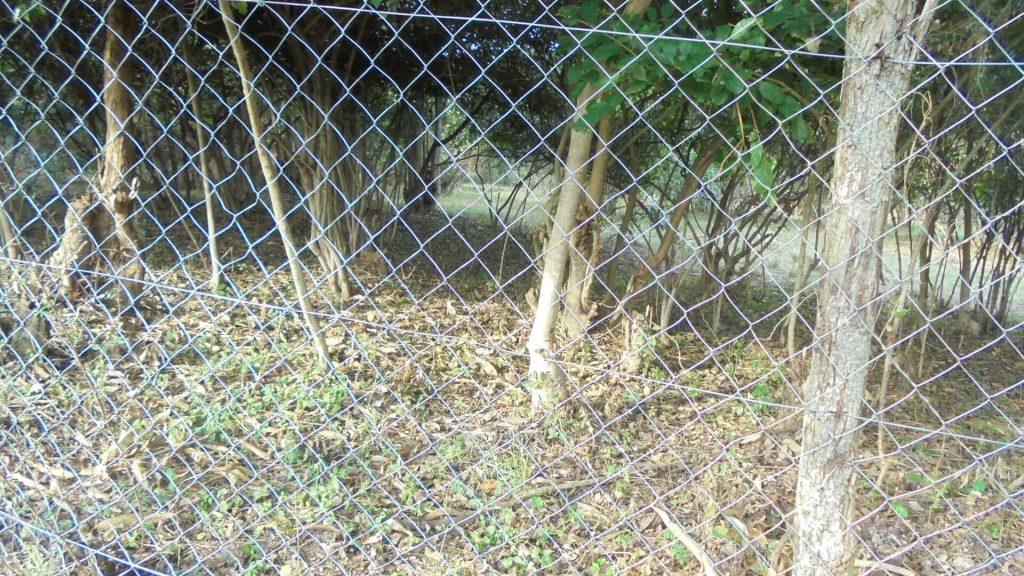goat rearing hide 2- exfanug